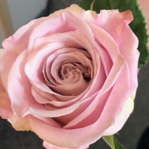 Individual roses
